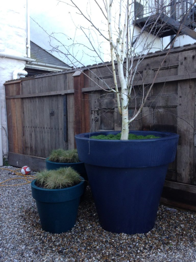 Feathered birch tree in contemporary planter
