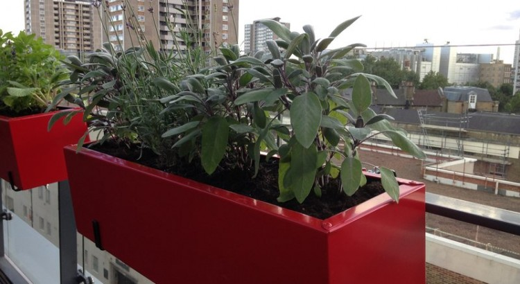 Roof Terrace Islington with sage in a herb trough