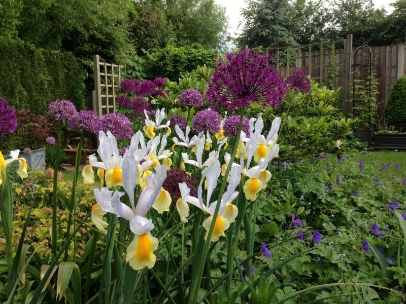 Spring planting Canonbury including alliums and iris