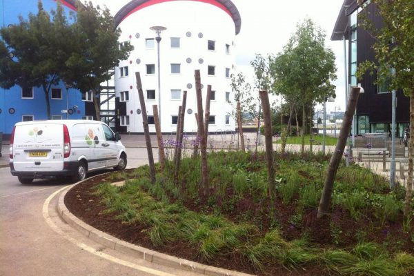 Planting for biodiversity University of East London 2