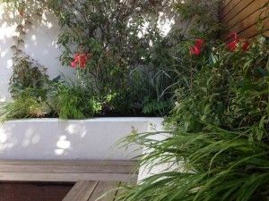 childs_hill_london_courtyard_garden_1