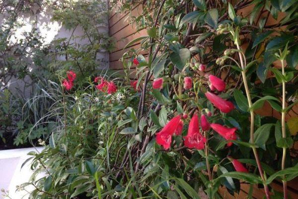 childs_hill_london_courtyard_garden_2
