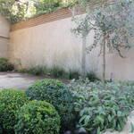 planting design primrose hill 4