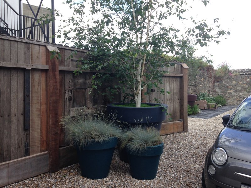 Three oversized planters planted with birch tree & ornamental grasses