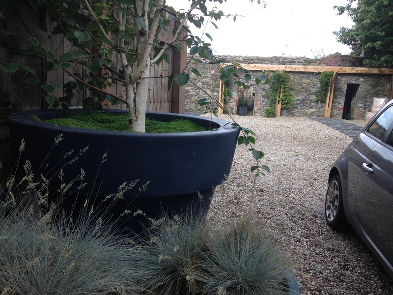 Oversized planter with birch tree in walled garden