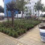 Planting for biodiversity University of East London