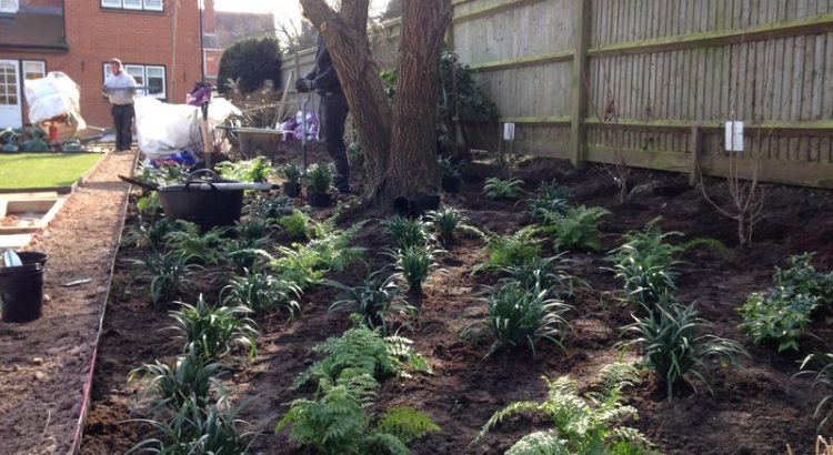 Woodland planting beneath a mature tree in a contemporary garden design