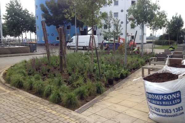 Planting for biodiversity University of East London 1