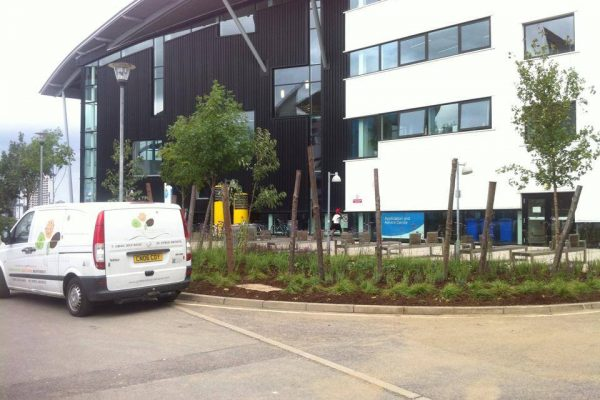 Planting for biodiversity University of East London 3